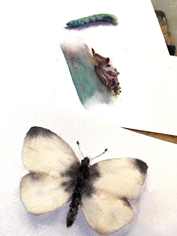 borboleta02